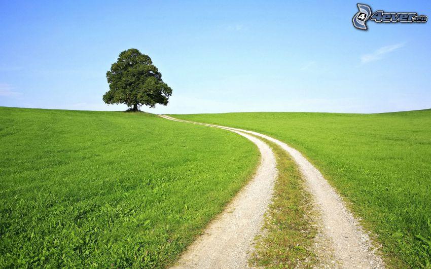 osamelý strom, poľná cesta, lúka