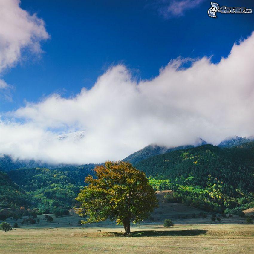osamelý strom, vietor, kopce, oblaky