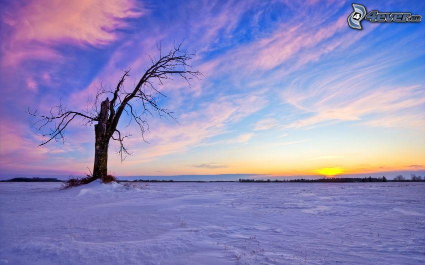 osamelý strom, vyschnutý strom, sneh