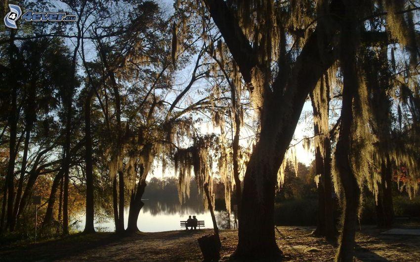 párik v parku, párik na lavičke, stromy, lavička pri jazere, park s jazierkom