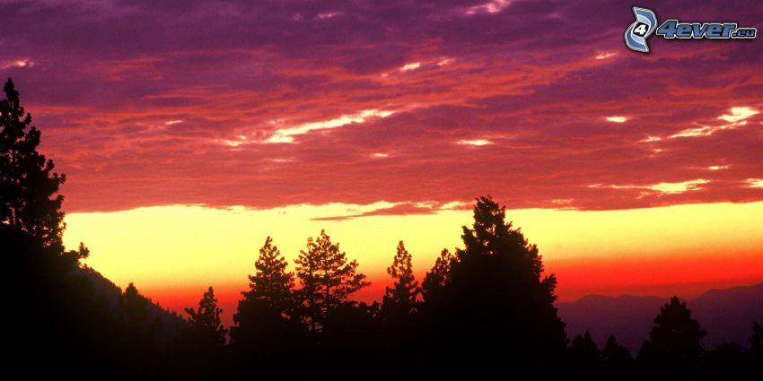 po západe slnka, fialová obloha, silueta lesa