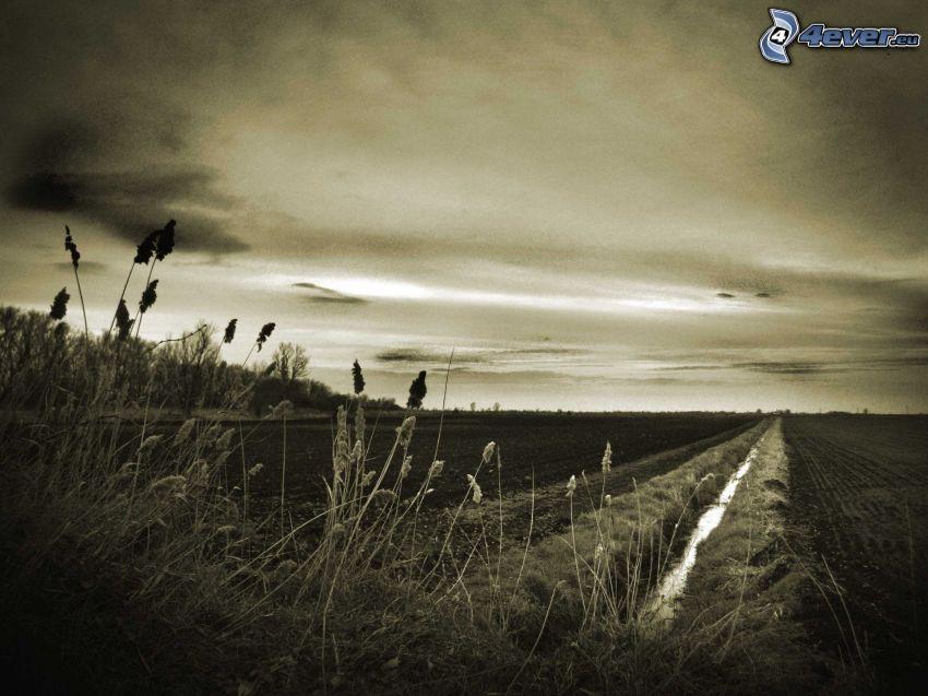 pole, steblá trávy, sépia