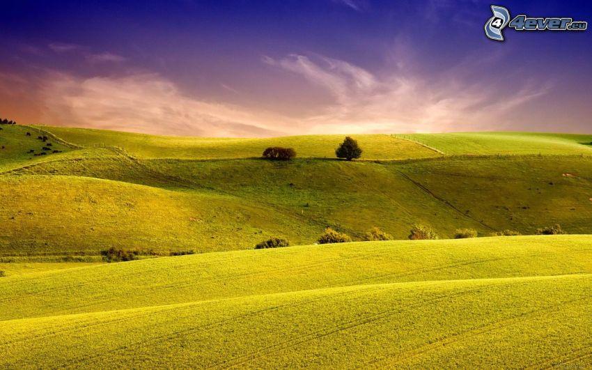 pole, stromy, večerná obloha