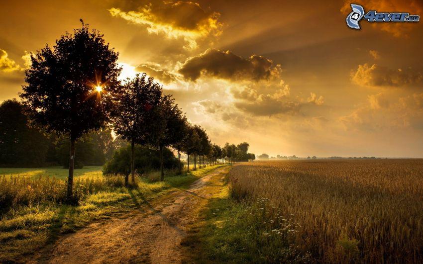 poľná cesta, dozreté pšeničné pole, stromová alej, slnko za oblakmi, HDR