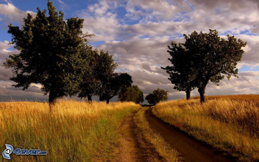 poľná cesta, pole, stromová alej, oblaky