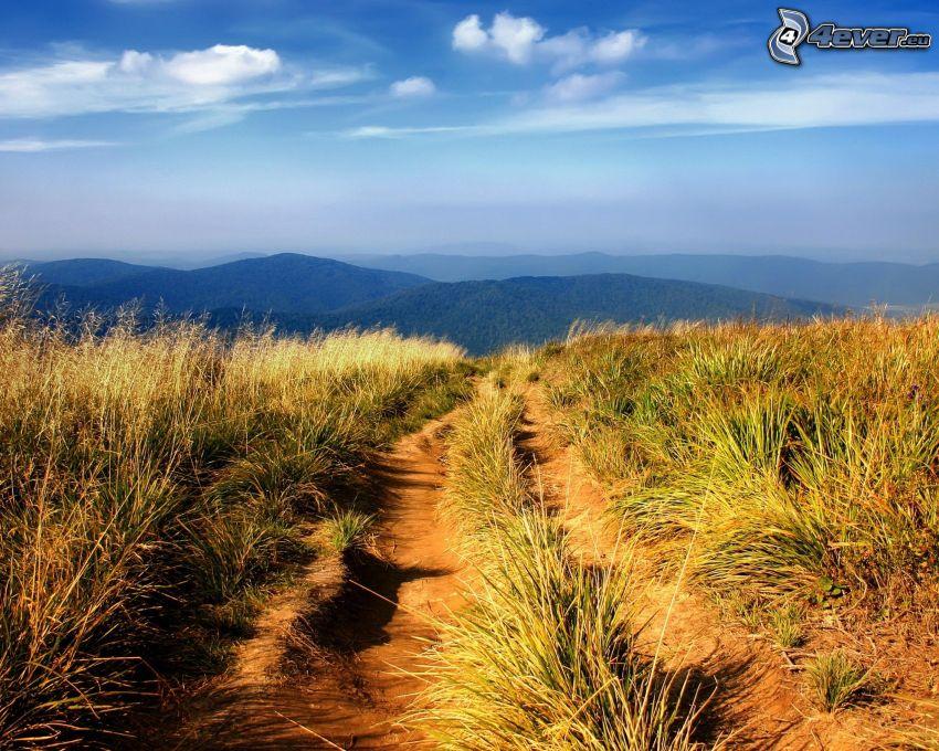 poľná cesta, vysoká tráva, kopce
