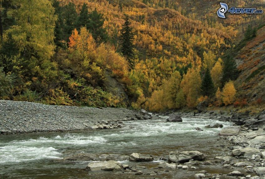 potok, jesenné stromy