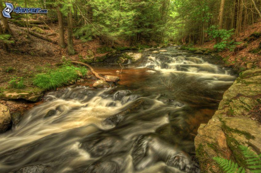 potok v lese, HDR