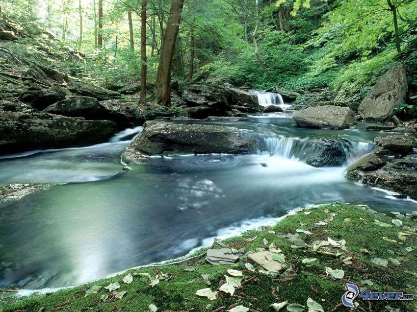 potok v lese, vodopády, skaly, zeleň