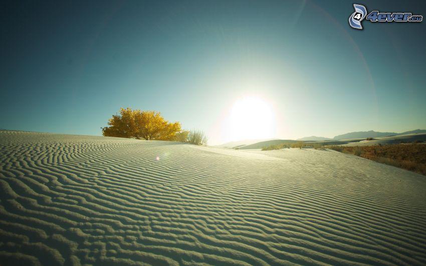 púšť, piesočné duny, osamelý strom, západ slnka