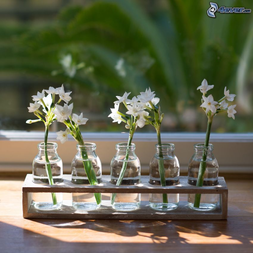 biele kvety, kvety vo váze