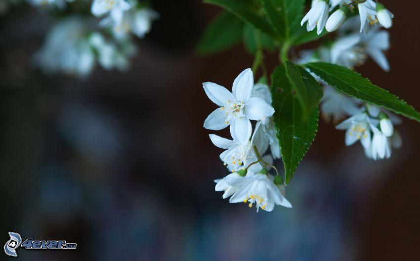 biele kvety