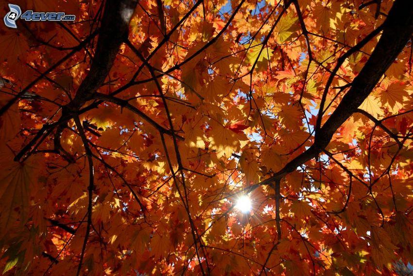 farebné lístie, stromy, slnko