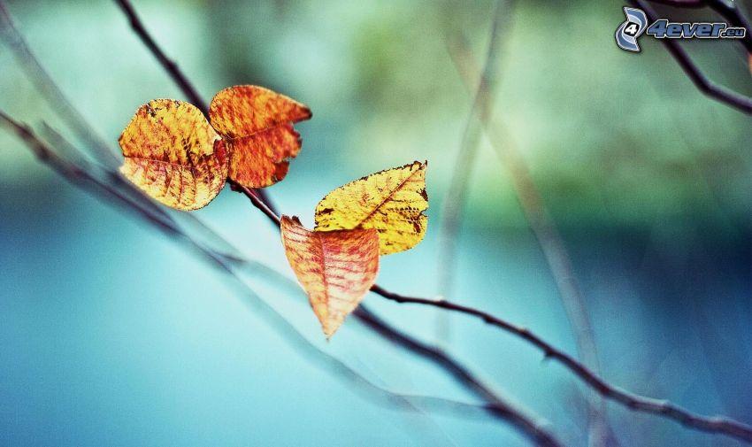 jesenné listy, konár