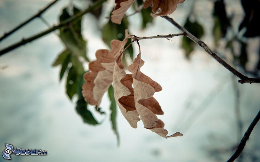 jesenné listy, konárik
