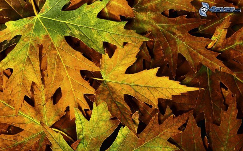 jesenné listy, žltý jesenný list