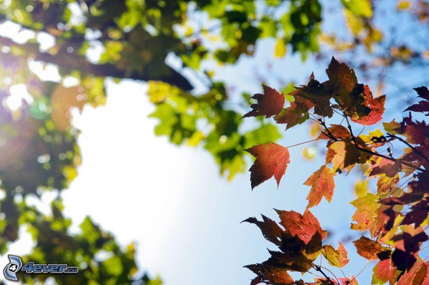jesenné listy