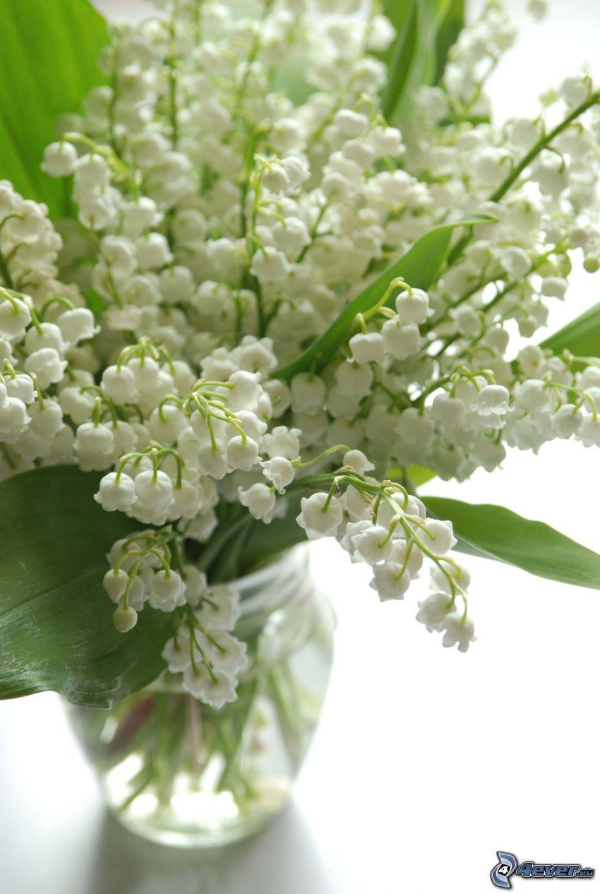 konvalinky, váza, zelené listy