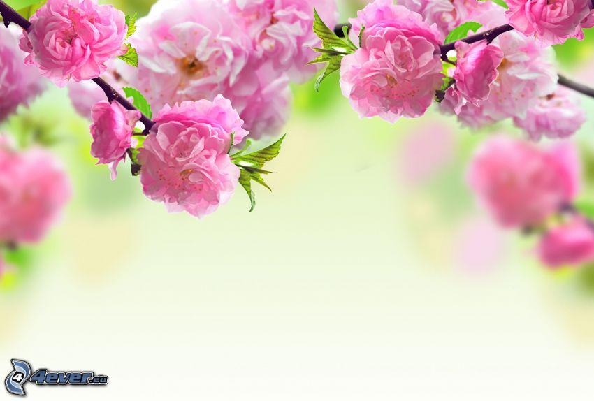 kvitnúci konárik, ružové kvety