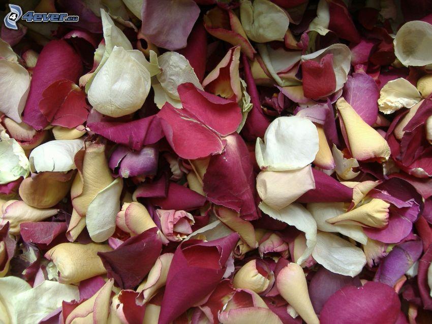 lupene ruží
