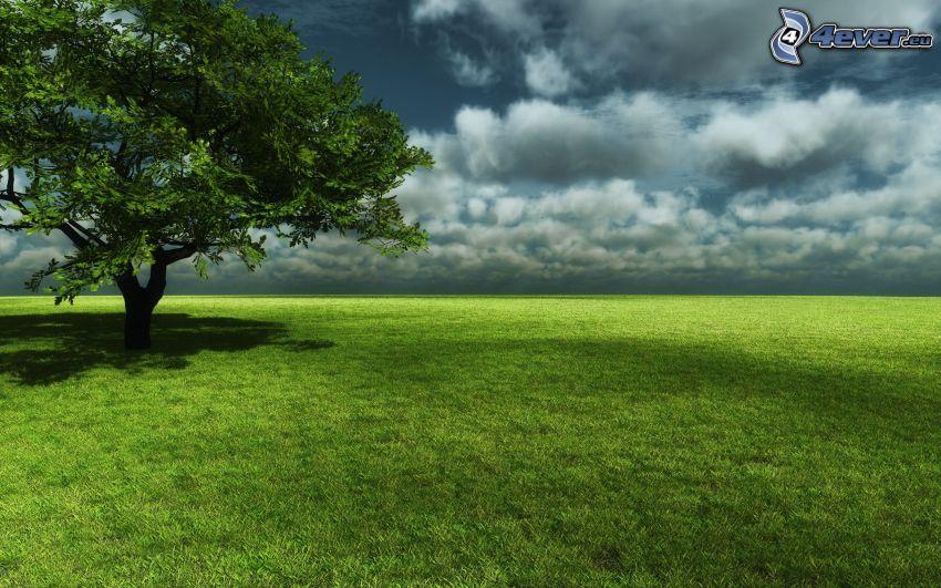 osamelý strom, lúka, tmavé oblaky