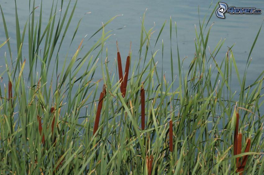 pálky, vysoká tráva