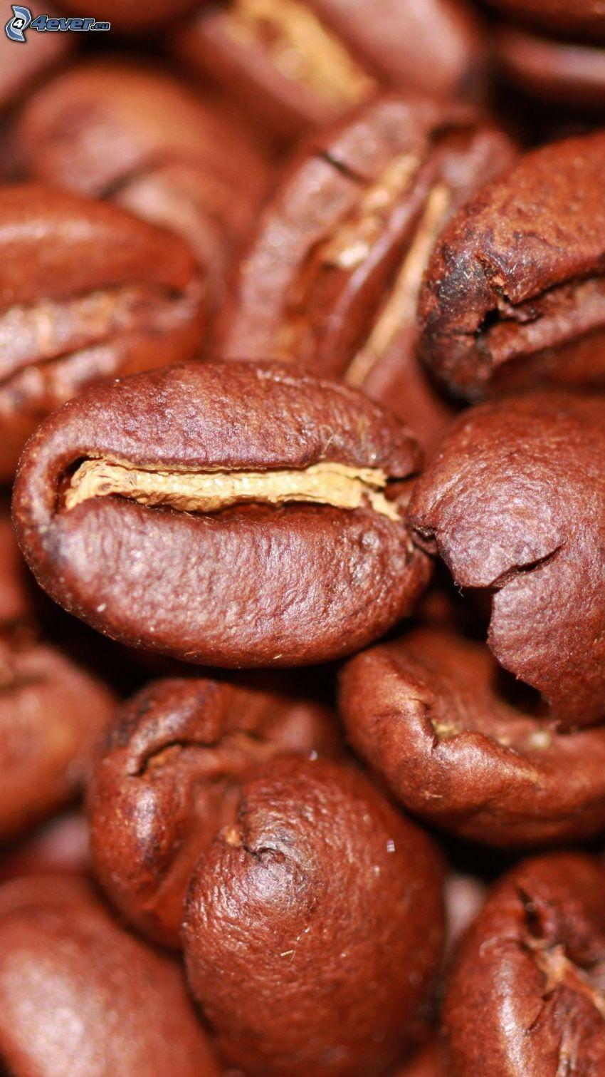 kávové zrná, makro