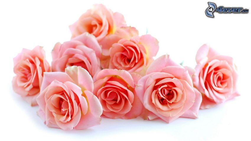 ružové ruže