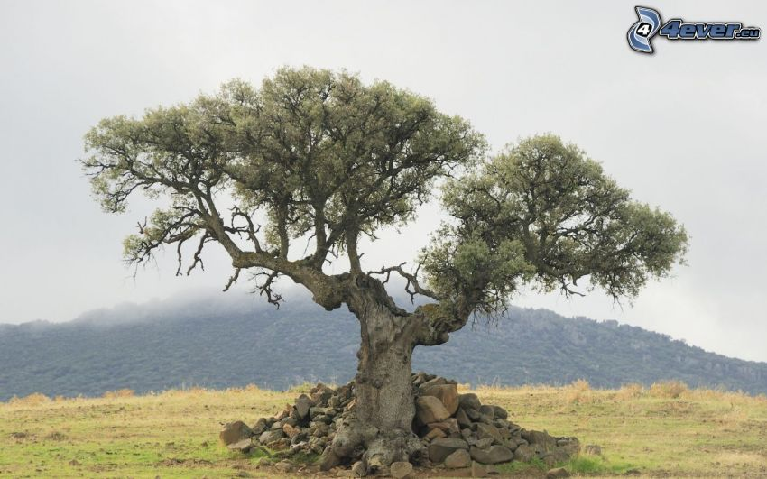 strom, kamene, kopec
