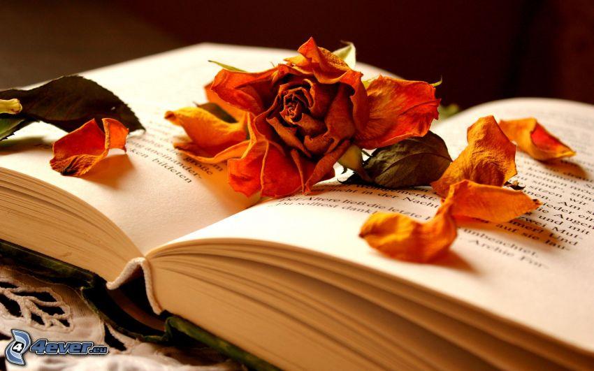 suchý kvet, kniha, ruža