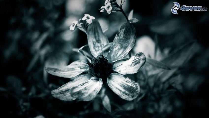 suchý kvet