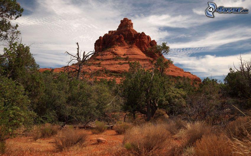 Sedona - Arizona, skaly, stromy