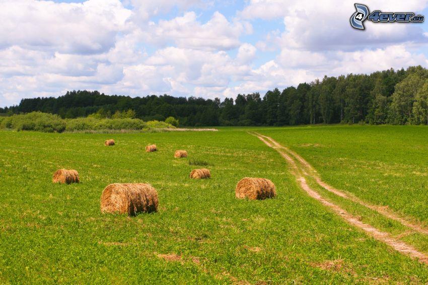 seno po žatve, pole, poľná cesta, les