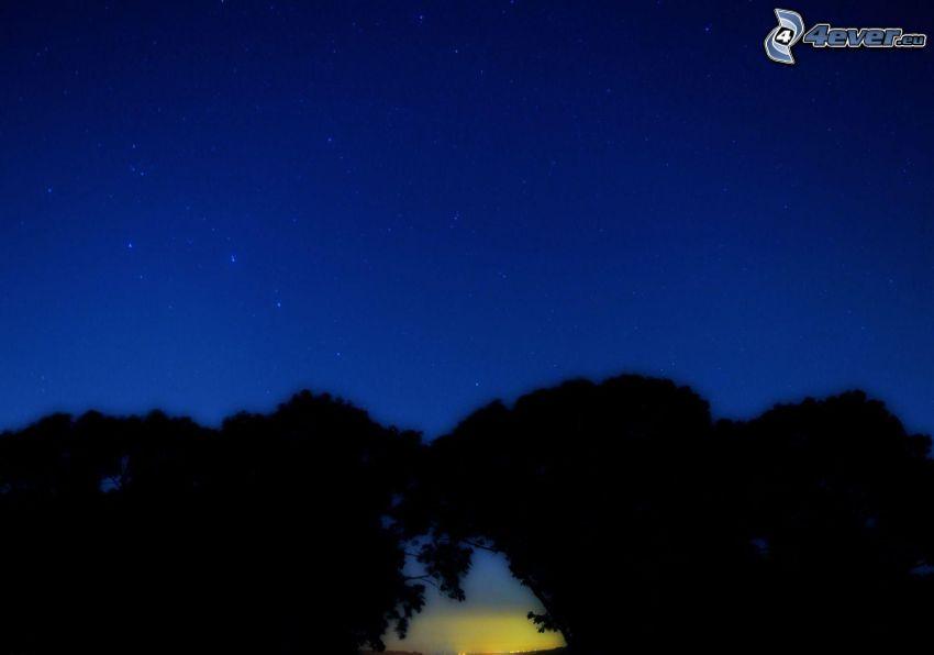 siluety stromov, hviezdy