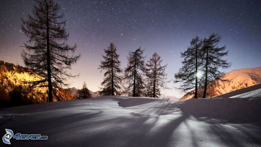 siluety stromov, nočná obloha, hviezdna obloha, sneh