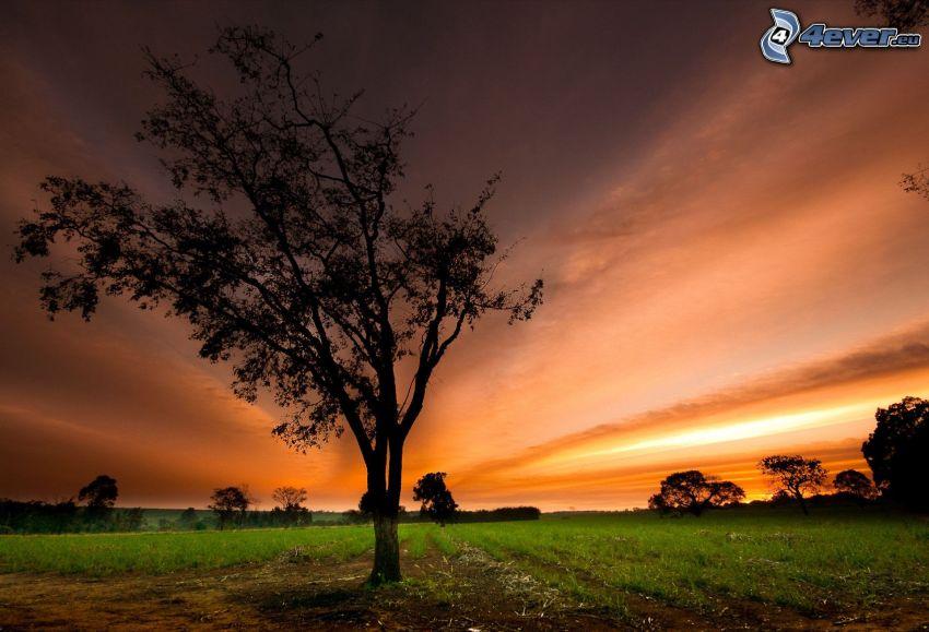 siluety stromov, oranžová obloha, pole
