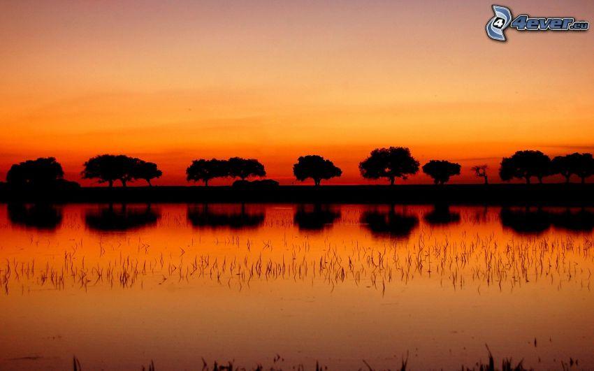 siluety stromov, rieka, oranžová obloha