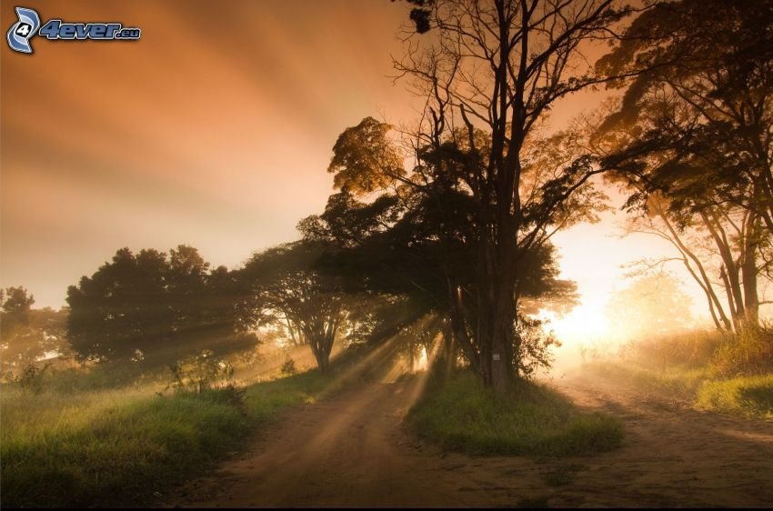 siluety stromov, slnečné lúče