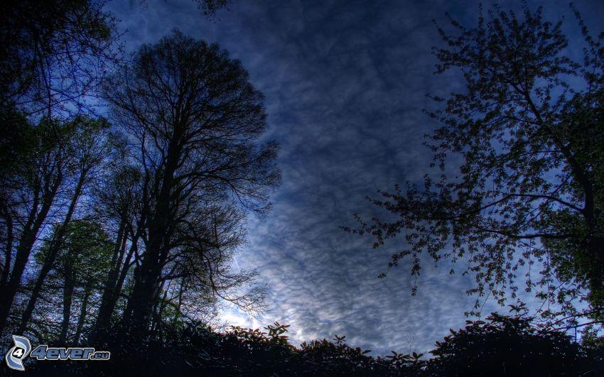 siluety stromov, tmavá obloha