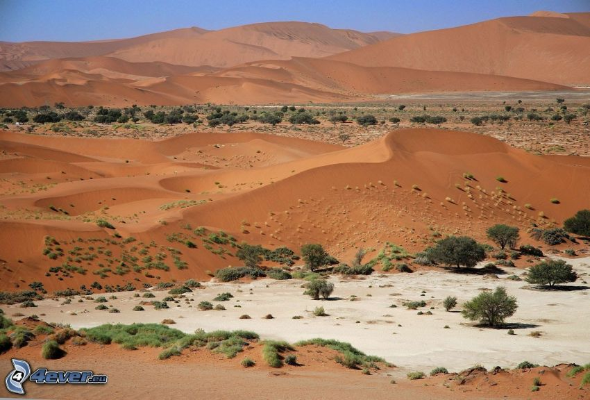 Sossusvlei, piesočné duny, stromy