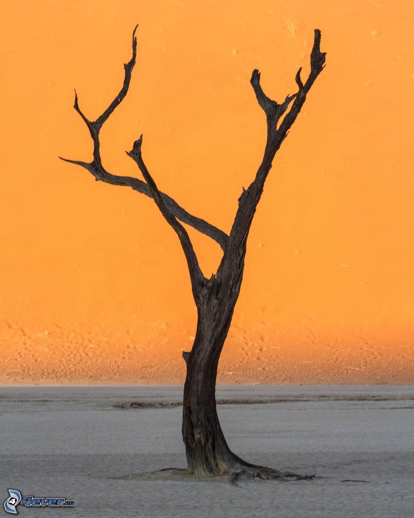 Sossusvlei, suchý strom, piesok