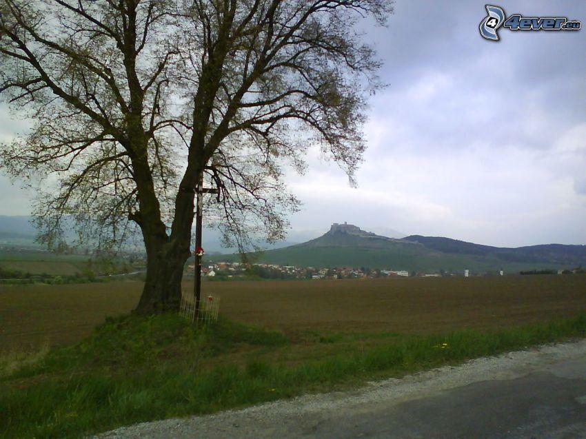 Spišský hrad, strom pri ceste, kríž, osamelý strom, dedinka