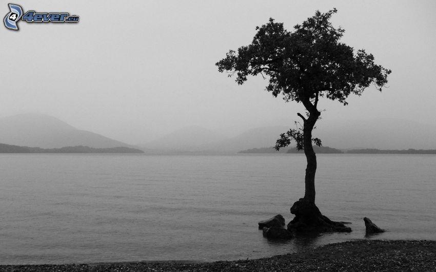 strom, jazero, hmla, čiernobiela fotka