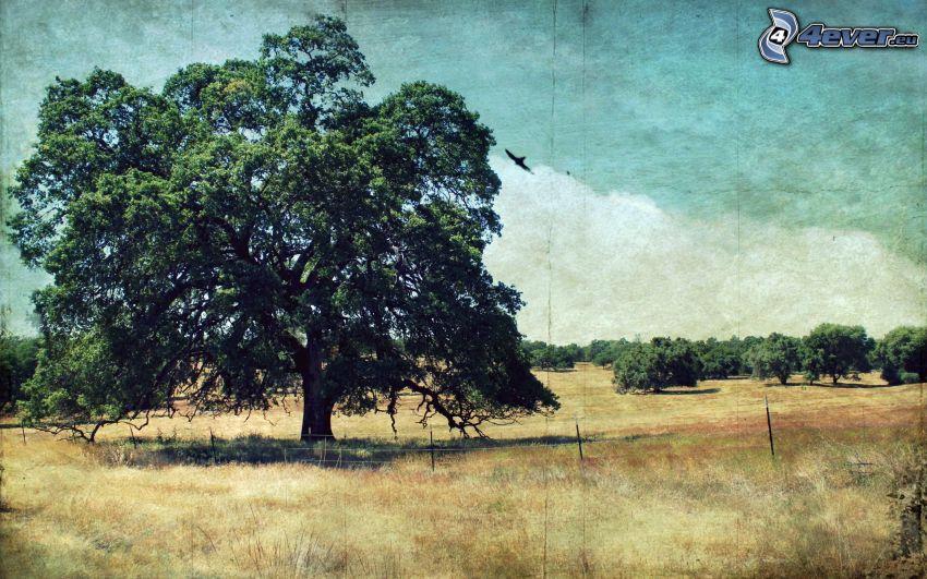 strom nad poľom, mohutný strom, stromy, stará fotografia