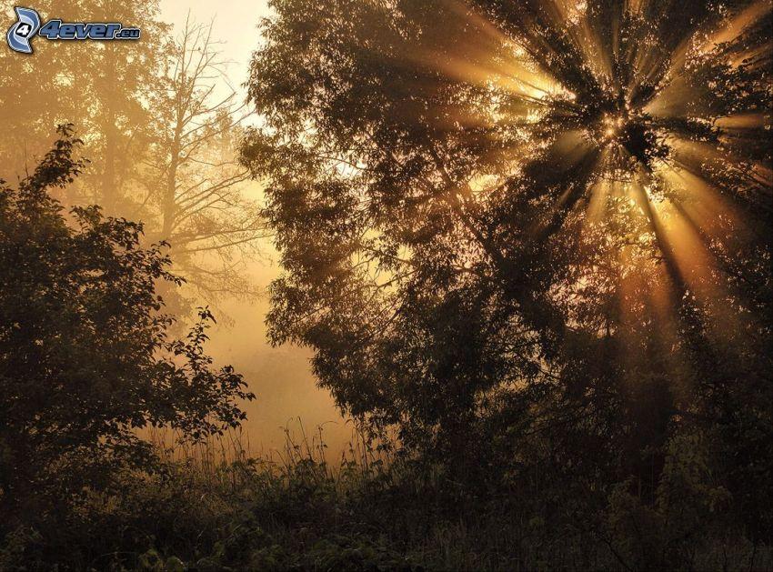 stromy, slnečné lúče