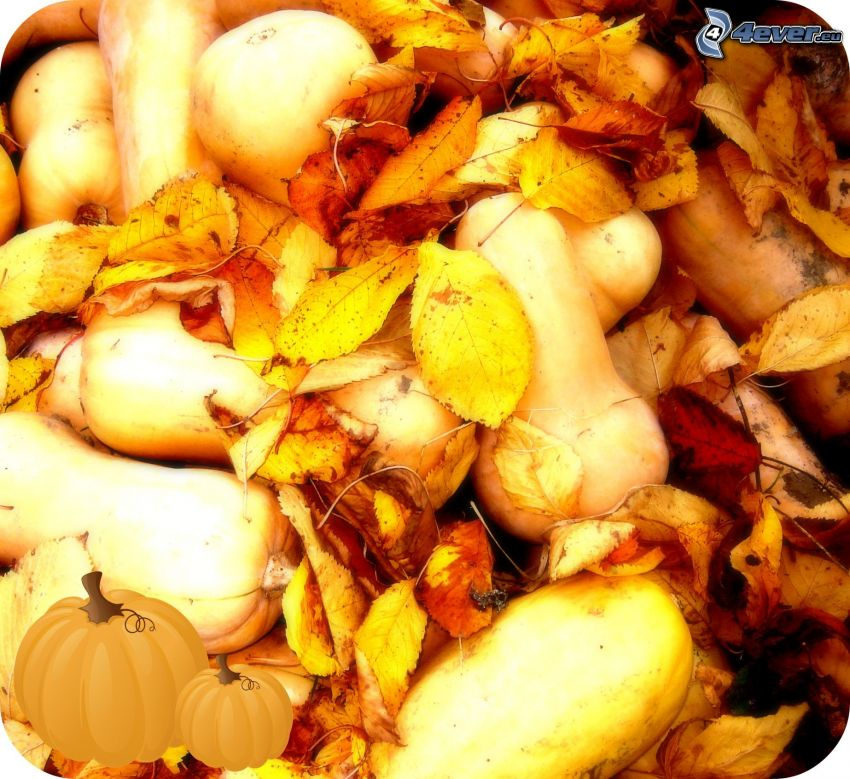 tekvice, jeseň, suché listy