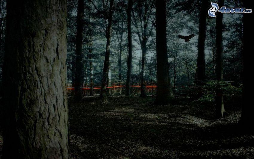 temný les, večer