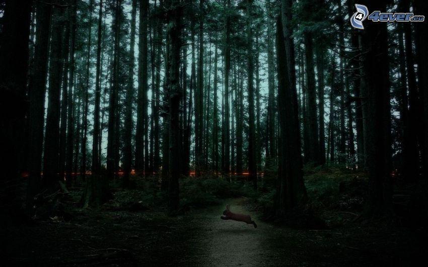 temný les, zajac, večer
