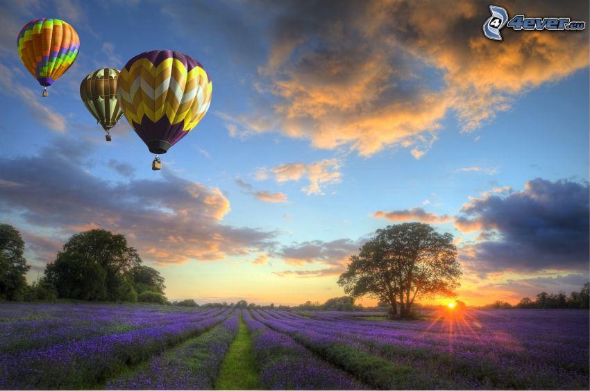 teplovzdušné balóny, levanduľové pole, západ slnka za poľom, oblaky, osamelý strom