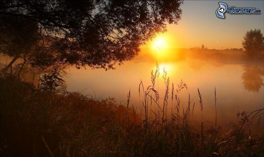 tráva na brehu jazera, západ slnka za jazerom, vysoká tráva, silueta stromu